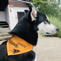 Druckatelier46 - Hundehalstuch mit Name Hund