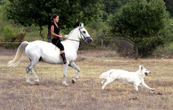 cheval chevaux berger blanc suisse bbs chiot chien washita ahow indien loup lof vendre a vends cherokee cheyenne jessie martinez montpellier 34