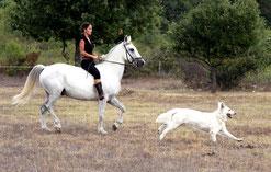 cheval chevaux berger blanc suisse bbs chiot chien washita ahow indien loup lof vendre a vends cherokee cheyenne jessie martinez montpellier 34