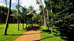 Jardins de Pamplemousses