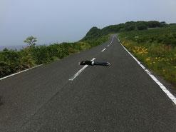 行き倒れ?いやいや、島のエネルギー充電中なのだ。うーむ、どうみても通り過ぎる車に救助されちゃう感じやねぇ。