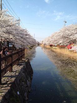 オジョーさん:埼玉県草加市・稲荷葛西用水