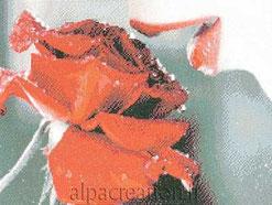 Broderie diamants femme fleur rose