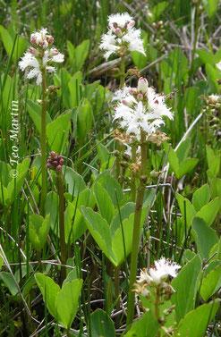 Foto 5. Detalle de foliación y floración.