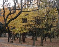 ●黄葉(武蔵野公園)