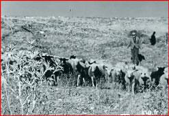 """berger et son troupeau """"Vie à Ste Croix du Verdon février 1957"""" capture d'écran"""
