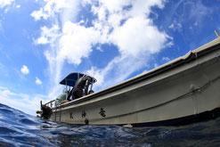 御蔵島のドルフィンスイム船竜神丸
