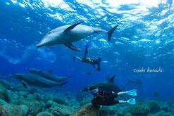 御蔵島のイルカと泳ぐドルフィンスイム