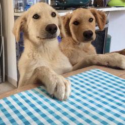 Hundetrainer Ausbildung