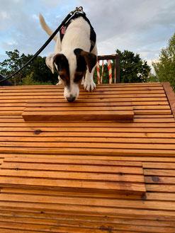 Agility-Platz beim Hundefreilauf Stade