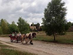 Eine offene große Kutsche mit zwei Pferden fährt vorbei an blühender Heide