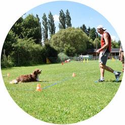obedience hundesport erziehen fuss gehen leine