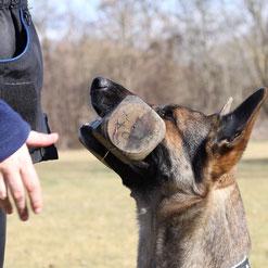 fuss gehen hundesport schäferhund erziehen