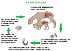 Calendrier Lunaire Vermifuge.Vermifuges Naturels Site De Vismedicatrixnaturae La