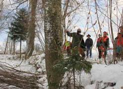 Waldberatung Beratung Wald, Waldschatzung