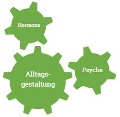 Für das Alltgsmanagement schauen wir uns deine Psyche, deine Hormone und deine Alltagsgestaltung an.