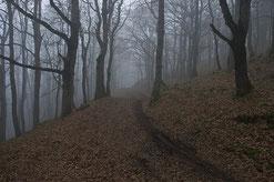 un bosco invaso dalla foschia