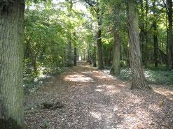 Le bois du Paradis Saint-Laurent-Nouan