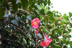 現在 開花している木の花