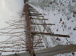 Neujahrs-Frost 2021 Weinfamilie Schober Feuersbrunn