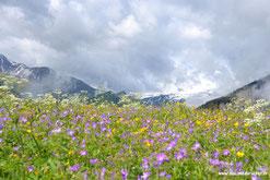 A la cime du rucher, miel de montagne récolté à Albiez