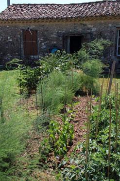 Unser Gemüse-Garten