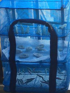 干物干し網に上からオクラとバナナと唐辛子を入れて