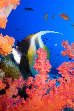 Farbenfrohes und Artenreiches Rotes Meer - ein Traum!