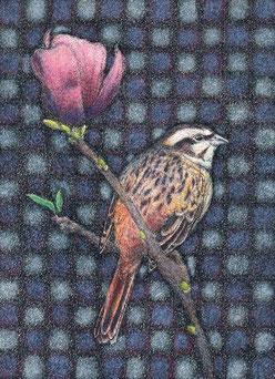 「ホオジロと木蓮」150x110mm 細密ペン画