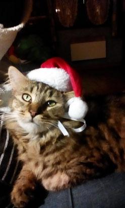 Un petit coucou de la part de Leny , qui se porte très bien. Je vous souhaite de bonnes fêtes de fin d année . Et une très bonne année 2017  Bien cordialement Mme  BGC