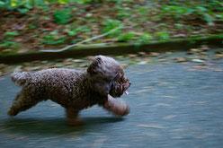 Les calmants pour chien peuvent aider les chiens anxieux ?