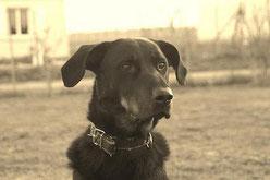 Témoignage Éducation canine dressage Charente Maritime (127)