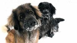 Morsures de chien - conséquences et gravité
