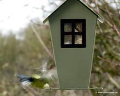Blaumeise fliegt vom Meisenknödelhaus weg