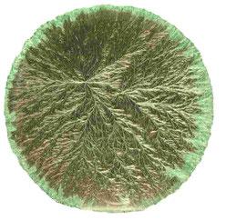 Kristallisationsbild von Honig-Salz-Brot, Weizen