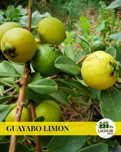GUAYABO LIMON EN TENERIFE
