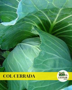 COL CERRADA - SEMILLEROS Y HORTALIZAS EN TENERIFE