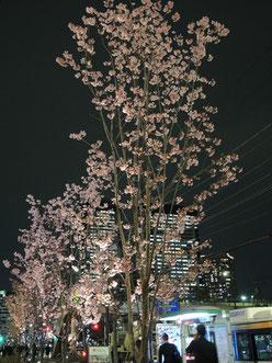 ドンちゃっくんさん:東京都江東区・豊洲