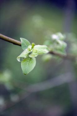 Im Kräutergarten; Naturkosmetik; Naturseifen; Naturkosmetik; Naturseifen;