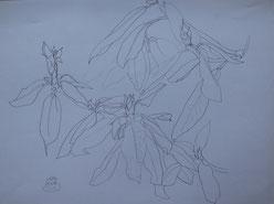 Pencil drawing (1987)