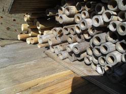 Die rote Mauerbiene nistet im Frühjahr in den Bambusröhrchen.