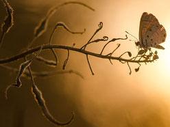 Der Flügelschlag eines Schmetterlings...