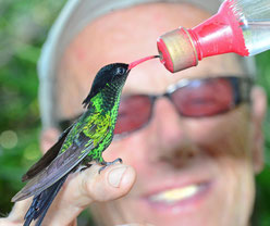 Your holiday in Jamaica is incomplete without seeing those rare Hummingbirds