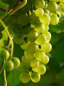 Raisin vin fruité GD Industries