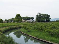 犀川と柿畑