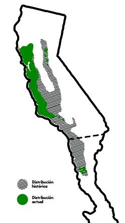 Color verde indica la distribución histórica de Rana draytonii;  color negro indica la distribución actual.