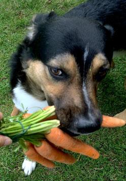 Natürliche Zahnpflege für Hunde - Traveldog - fair4world