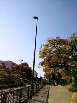 鎌倉 由比ヶ浜 若宮大路 SJOCOFFEE
