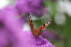 Valerie Forster, Fotografieren aus Liebe zur Natur