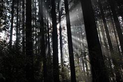 Valerie Forster, Ein Waldspaziergang mit bitterem Nachgeschmack